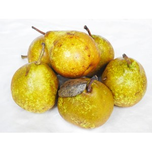 Pears - Beurre Bosc