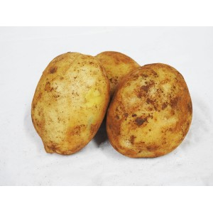 Potatoes - Brushed New Season (Each)