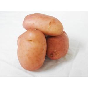 Potatoes - Desiree (Each)