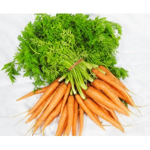 Carrots - Dutch