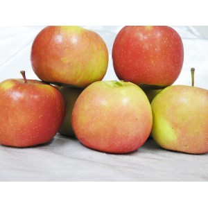 Apples - Fuji (1kg) New Season