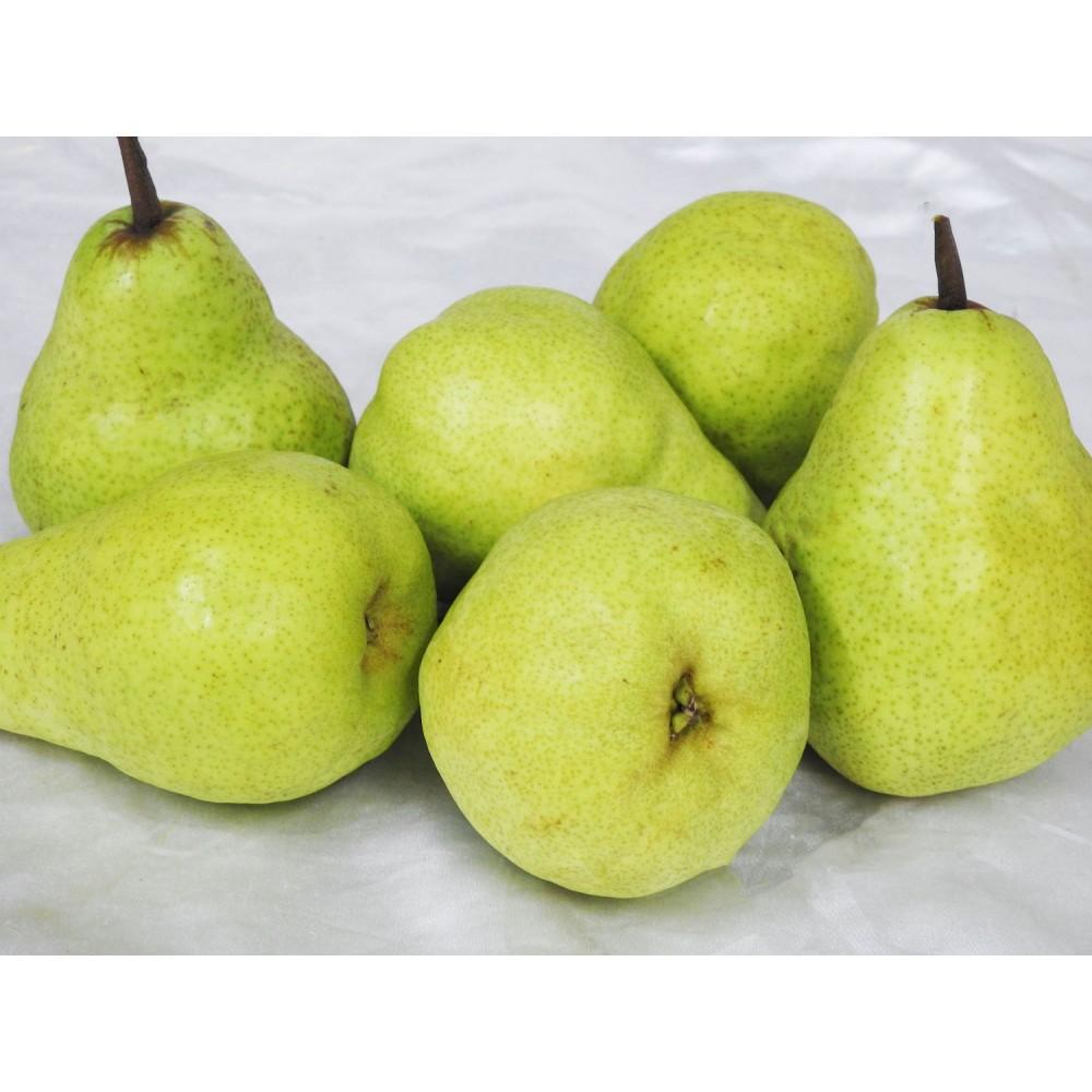 Pears - WILLIAM