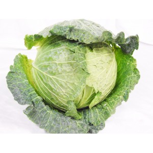 Cabbage green whole